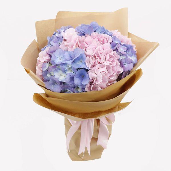 Hoa cẩm tú cầu tặng bạn gái