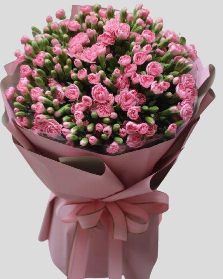 Hoa cẩm chướng hồng đẹp