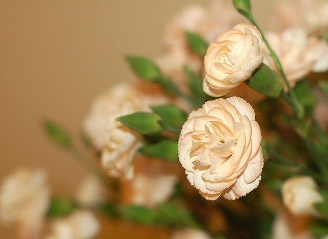 hoa cam chuong trang