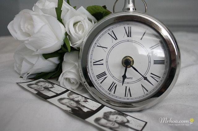 Hình ảnh hoa hồng trắng đẹp nhất