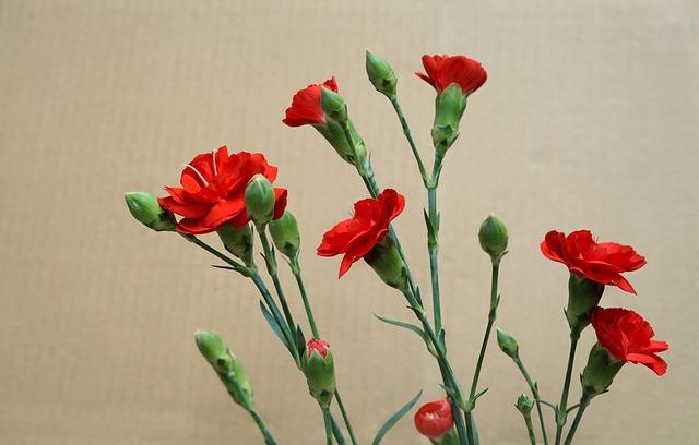 tang hoa cam chuong