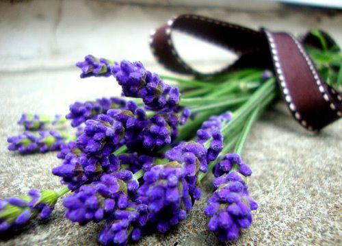 hinh anh dep va y nghia hoa oai huong 9