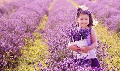 hinh anh dep va y nghia hoa oai huong 19