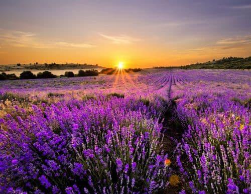 hinh anh dep va y nghia hoa oai huong 1