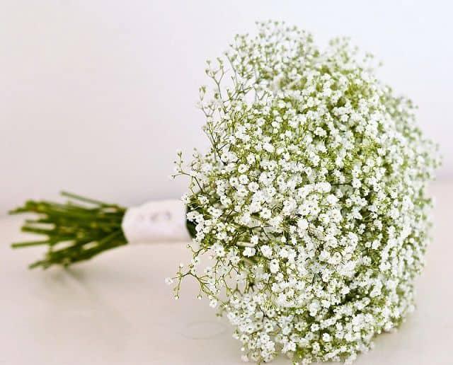 Hình ảnh đẹp hoa baby trắng