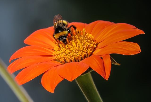 y nghia hoa dong tien cam