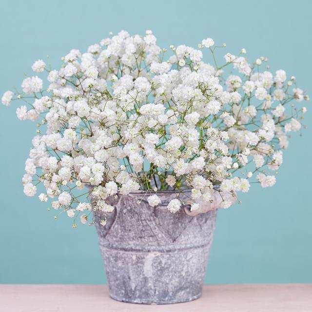 chau hoa bi dep nhat
