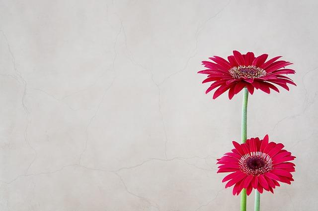 hoa dong tien trong phong thuy