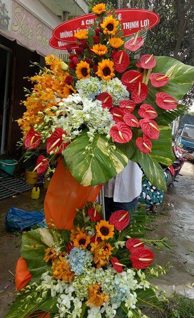 hoa khai truong duc hoa