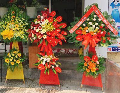 Hoa khai truong phu vang hue
