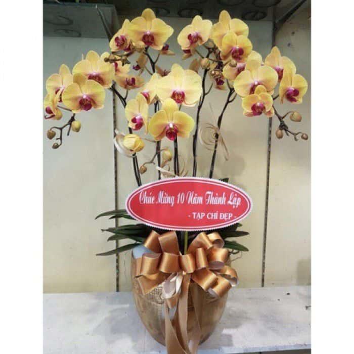 Hoa sinh nhat bo