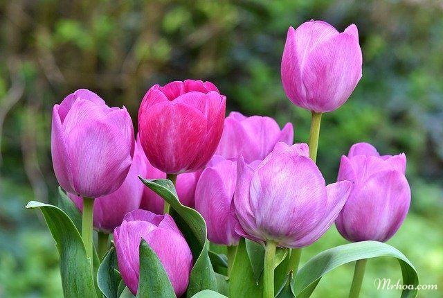 Hinh hoa tu lip dep