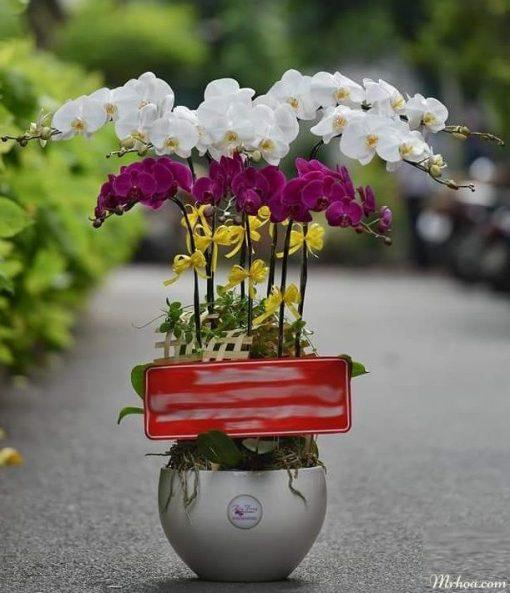 Tặng hoa quận Hoàng Mai Hà Nội