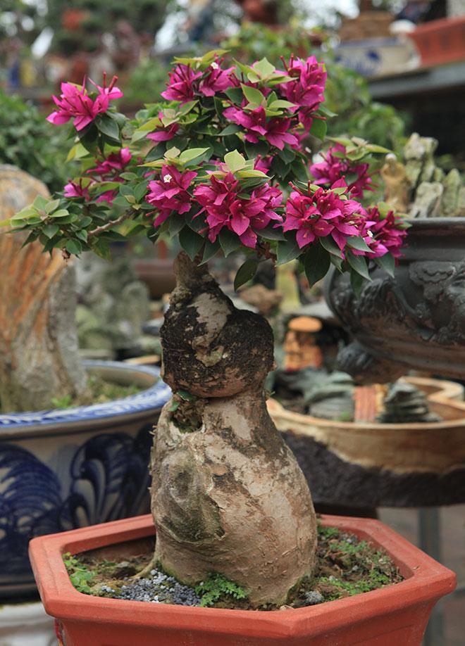 bonsai hoa giay
