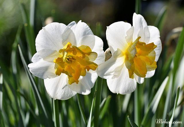 canh hoa thuy tien