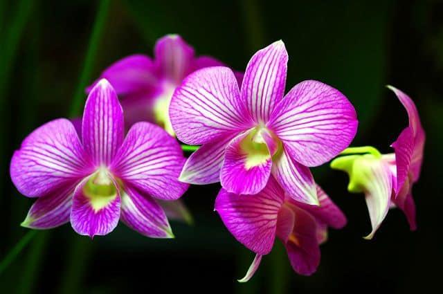 hoa đẹp nhất thế giới