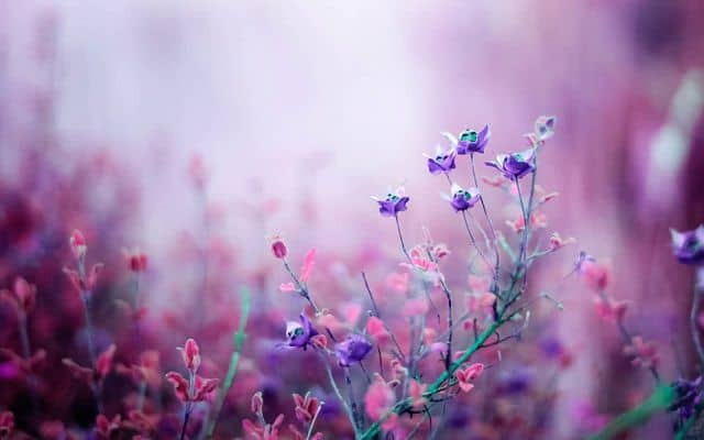 hình ảnh hoa đẹp