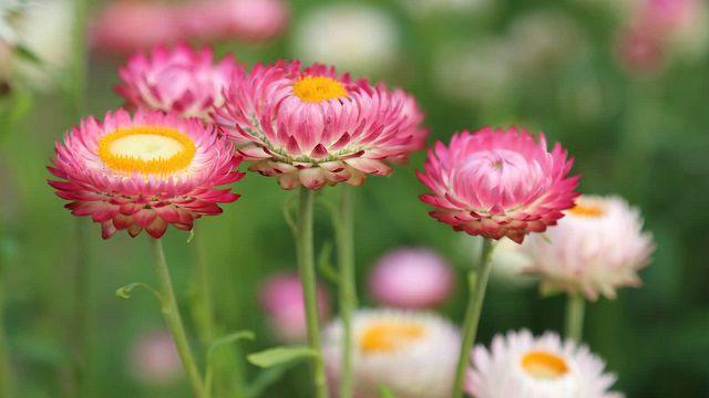 hoa dep nhat