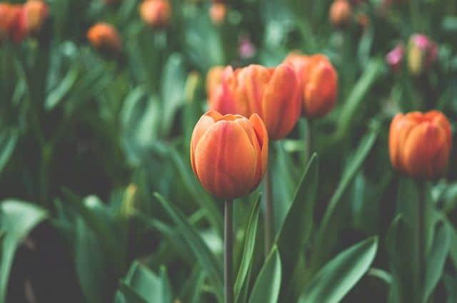 bong hoa dep nhat