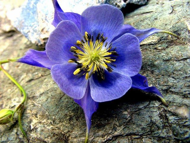 hoa lạ
