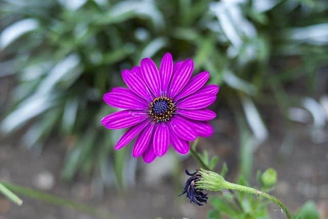 bông hoa đẹp