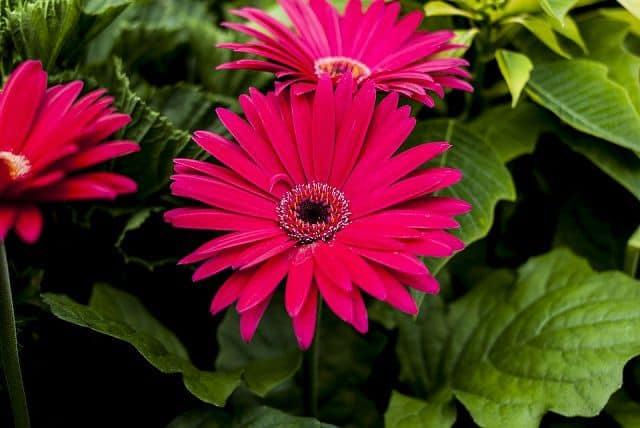 loai hoa dep nhat