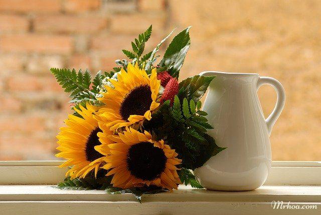 Y nghia hoa huong duong