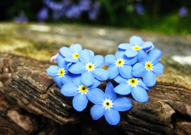anh hoa luu ly dep