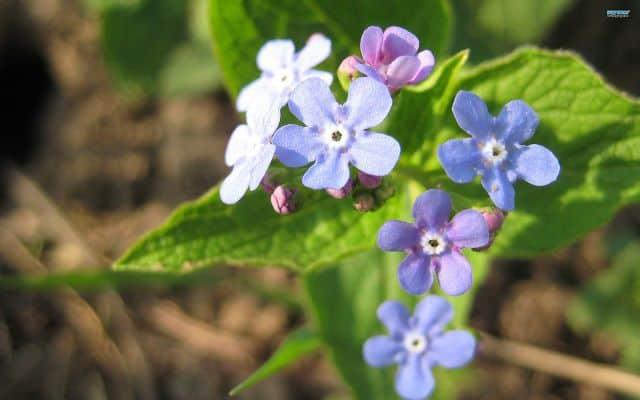 hoa luu ly trang