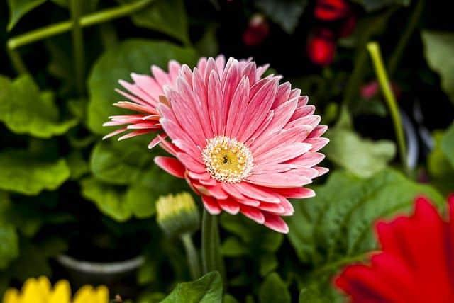 hoa dep tien