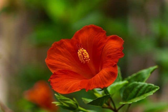 hoa dep don gian