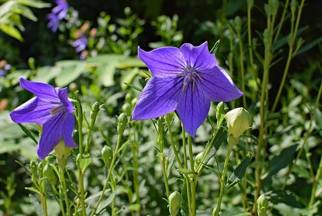 hoa cat canh mau xanh