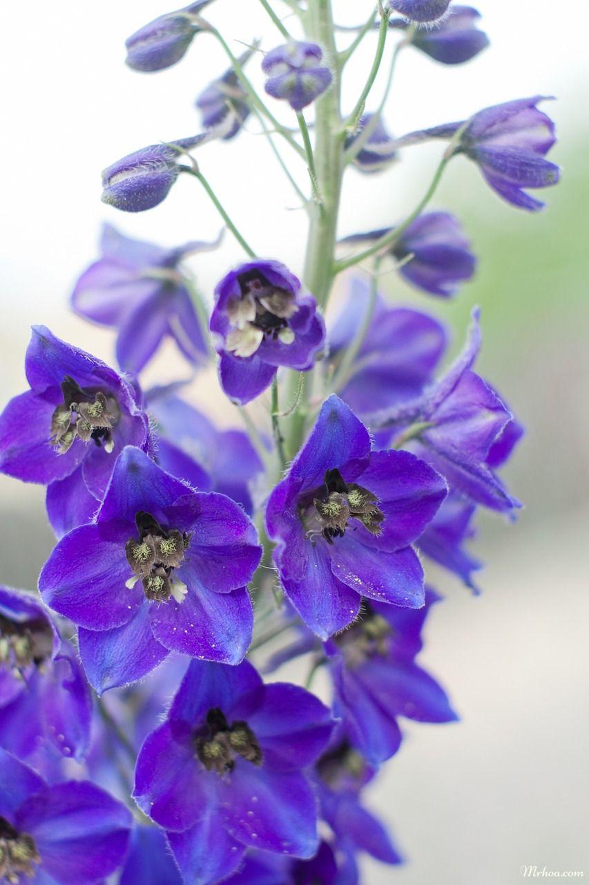 hoa dùng nhiều trong đám cưới