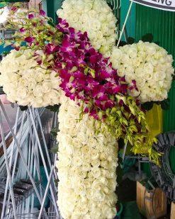 hoa tang cong giao