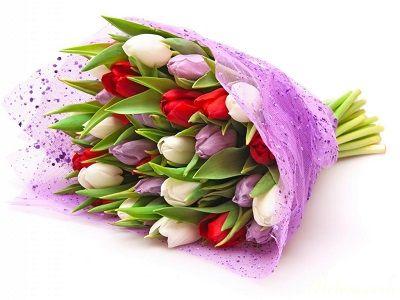 bo hoa tulip