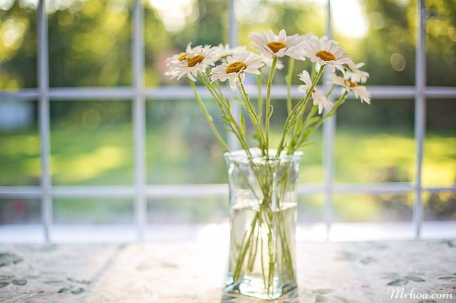 hoa cuc tang sinh nhat bo