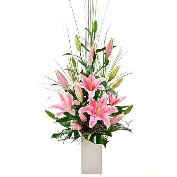 binh hoa ly do
