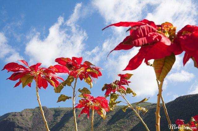 y nghia cay hoa trang nguyen