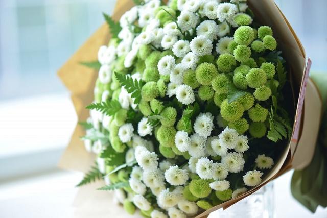 hoa calimero xanh trang