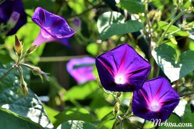 y nghia hoa bim bim tim