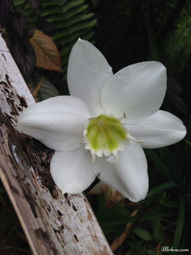 Y nghĩa hoa ngọc trâm