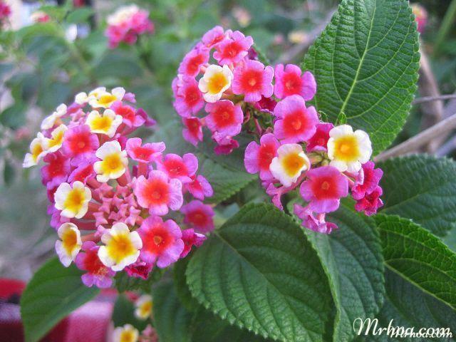 y nghia hoa ngu sac