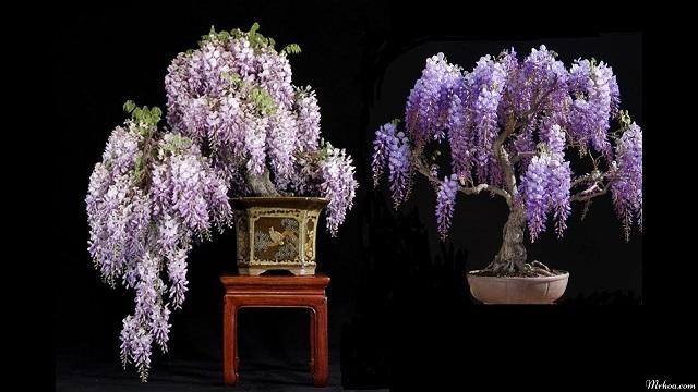 y nghia bieu tuong hoa tu dang