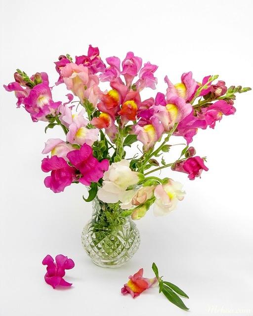 bo hoa mom soi