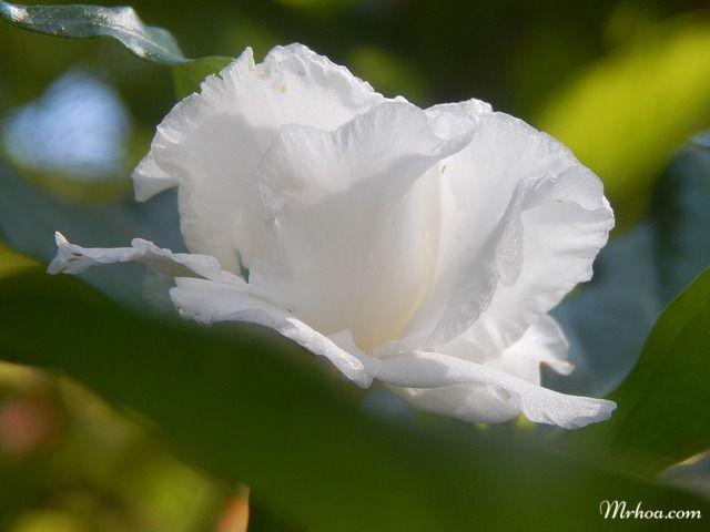 danh danh la hoa gi