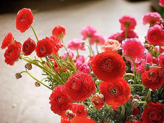 hoa mao luong dep