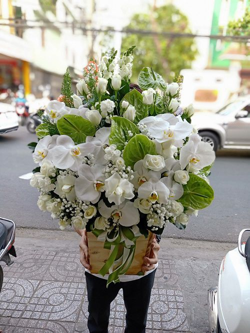 Hoa sinh nhật Bắc cạn