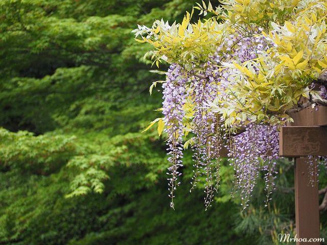 hoa tu dang nhat ban