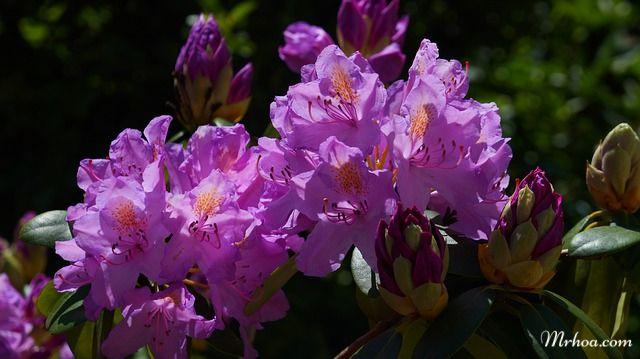 tang hoa do quyen