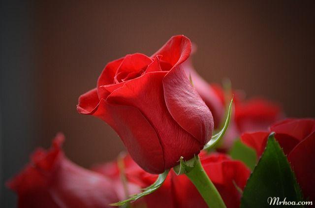 tang hoa ngay cuoi